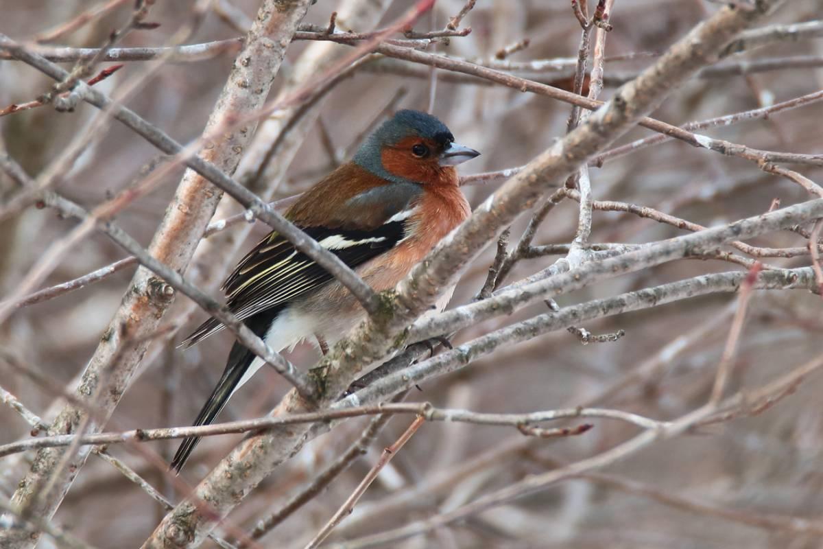 легче птицы мордовии фото с названиями китайський розпис тема