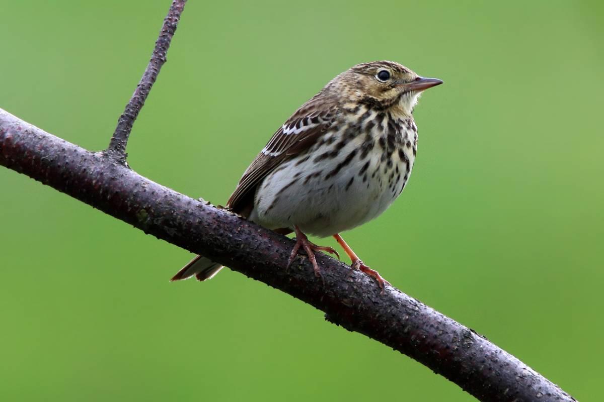 лесные птицы фото с описанием ломоносовский район нашем сайте