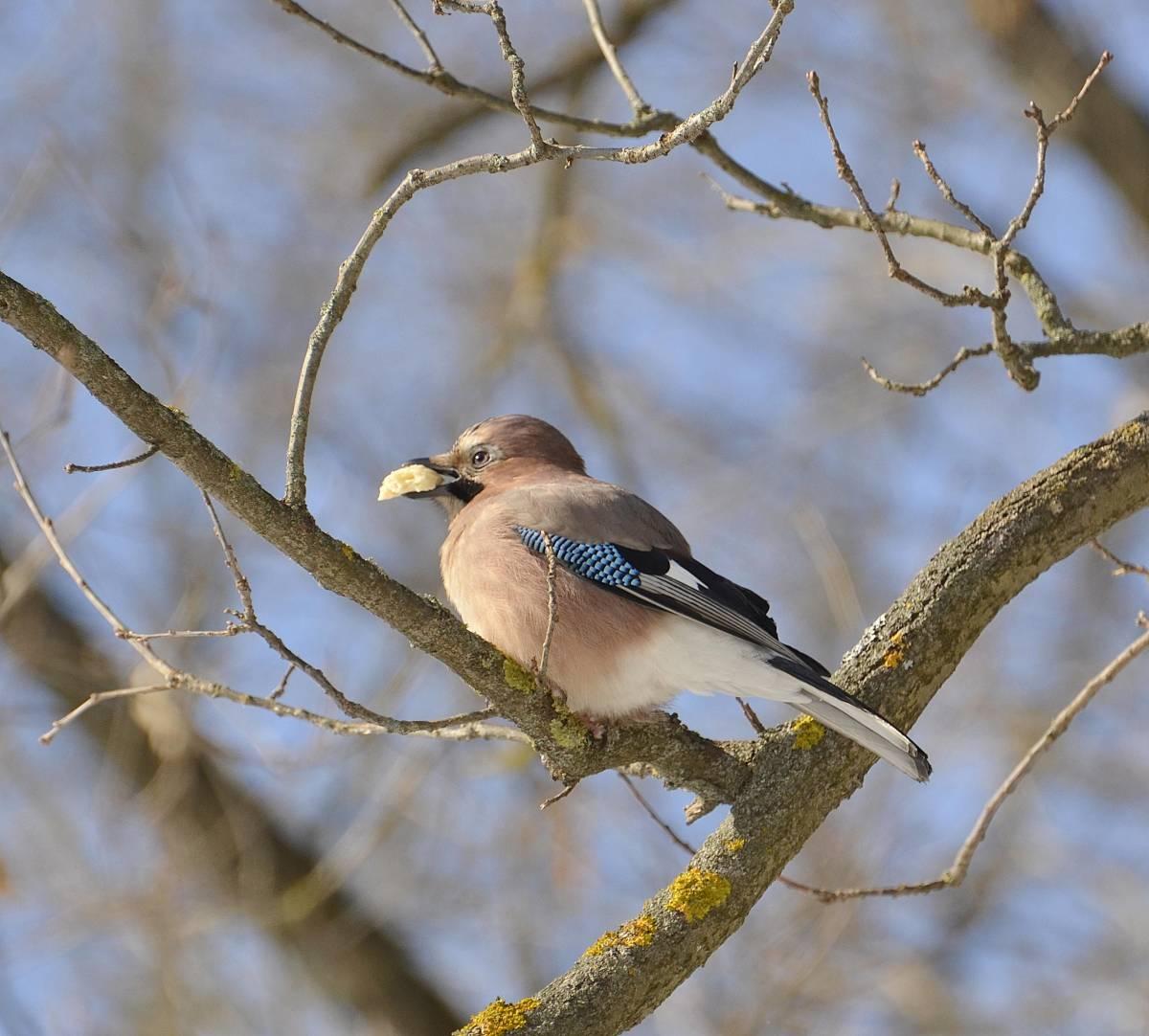 Птицы в саратовской области фото и названия