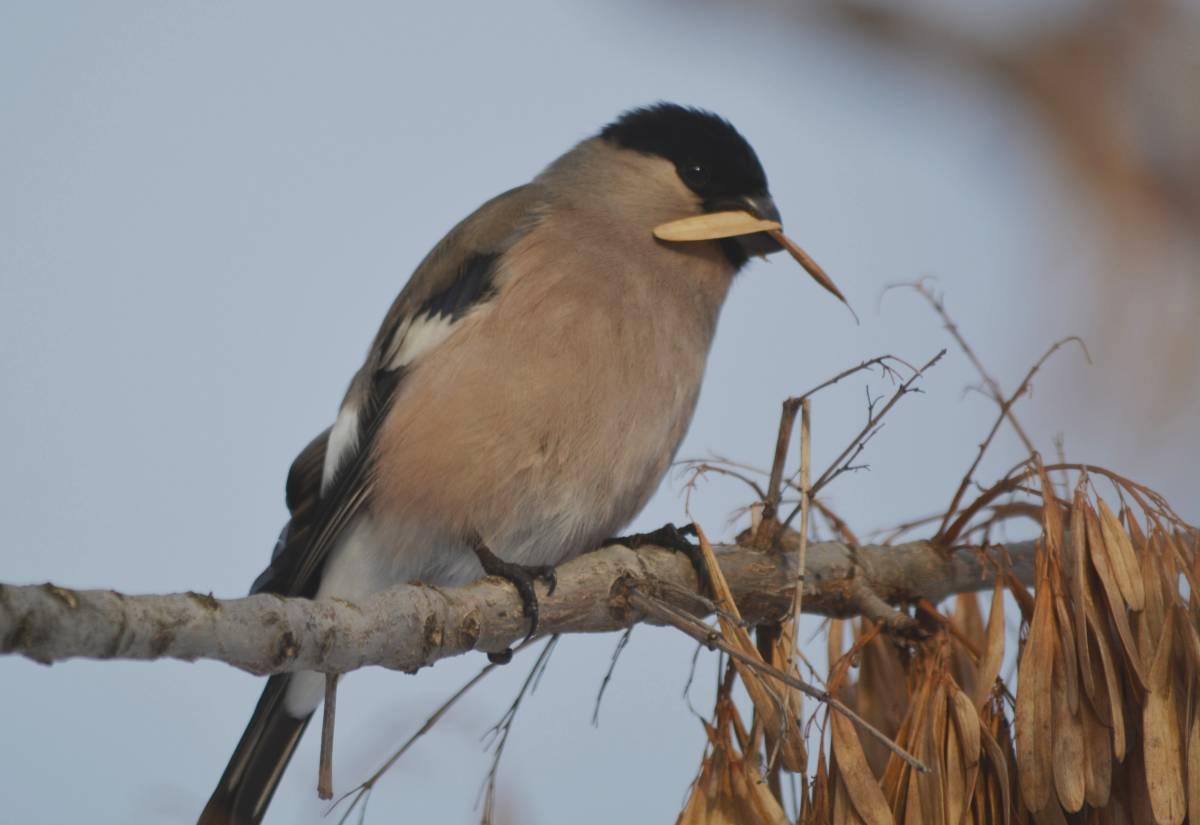 поэтому лесные птицы чувашии фото с названиями район расположен