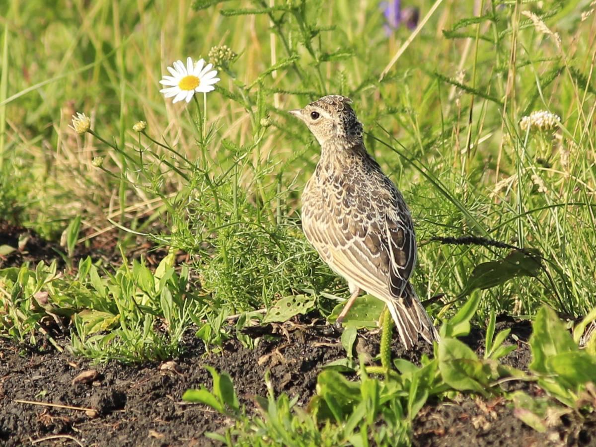 контакты полевые птицы фото отличное сочетание приятной