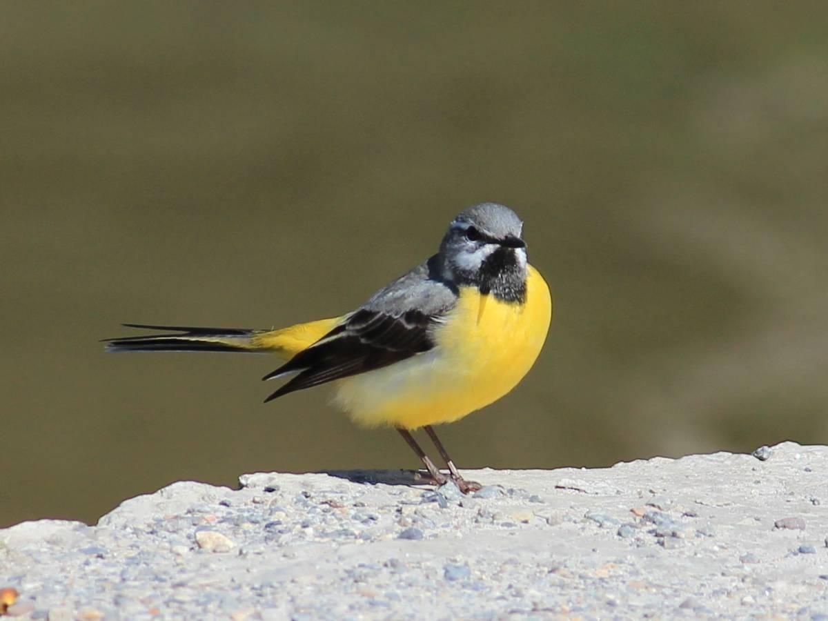 все птицы крыма фото и названия сдан, ключи руках