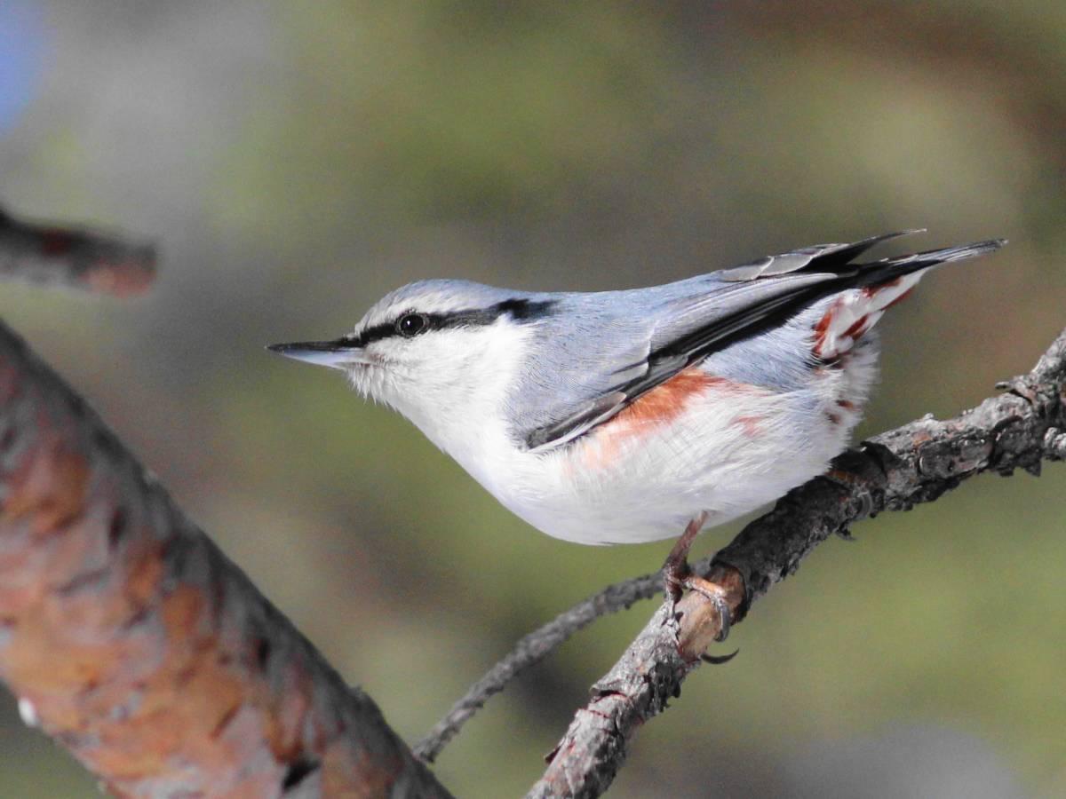 Птицы центра россии фото с названиями