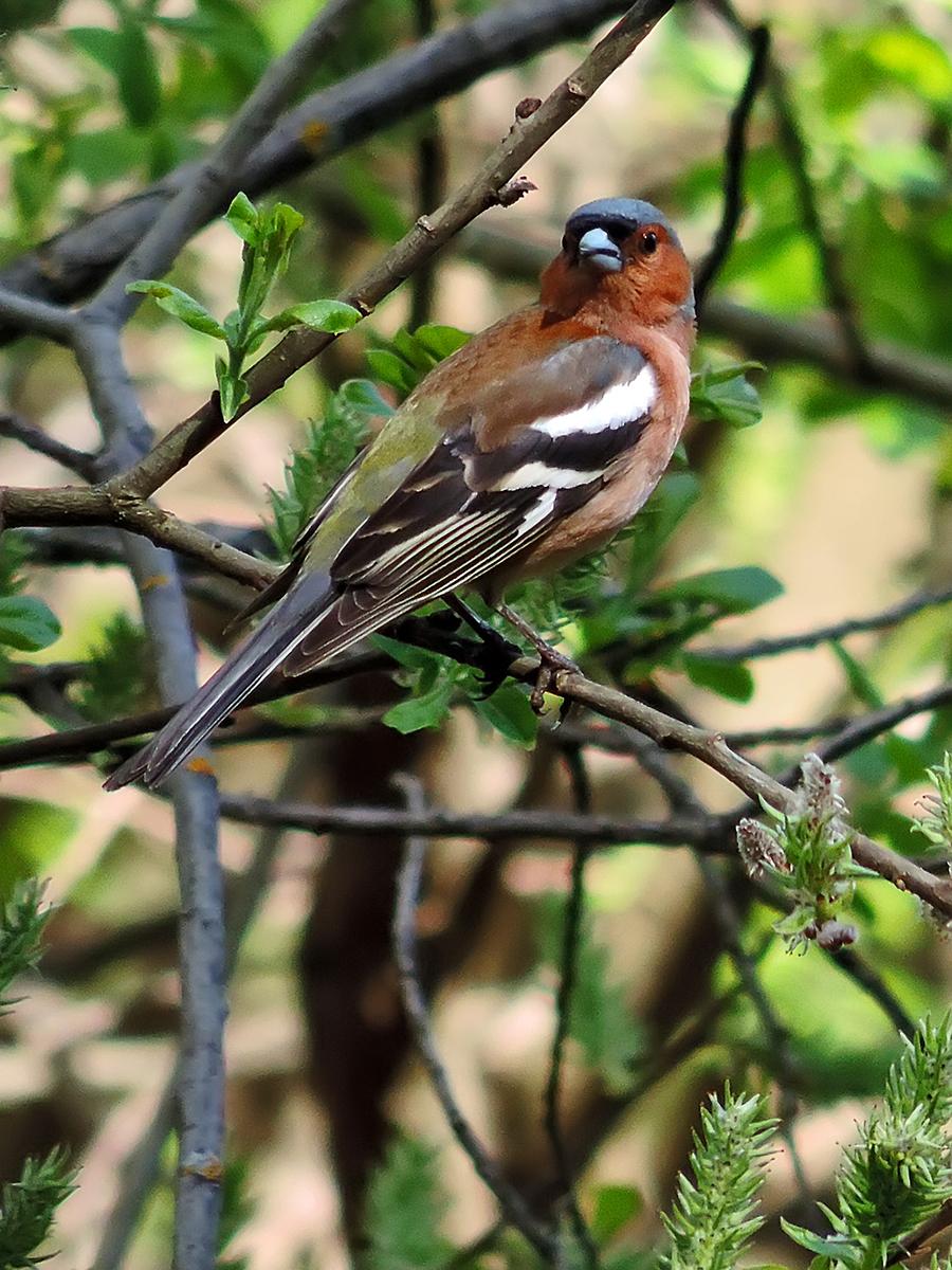 категории фото и названия лесных птиц там