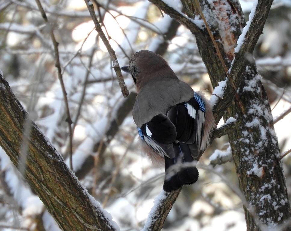 Птицы рузского района подмосковья с фото