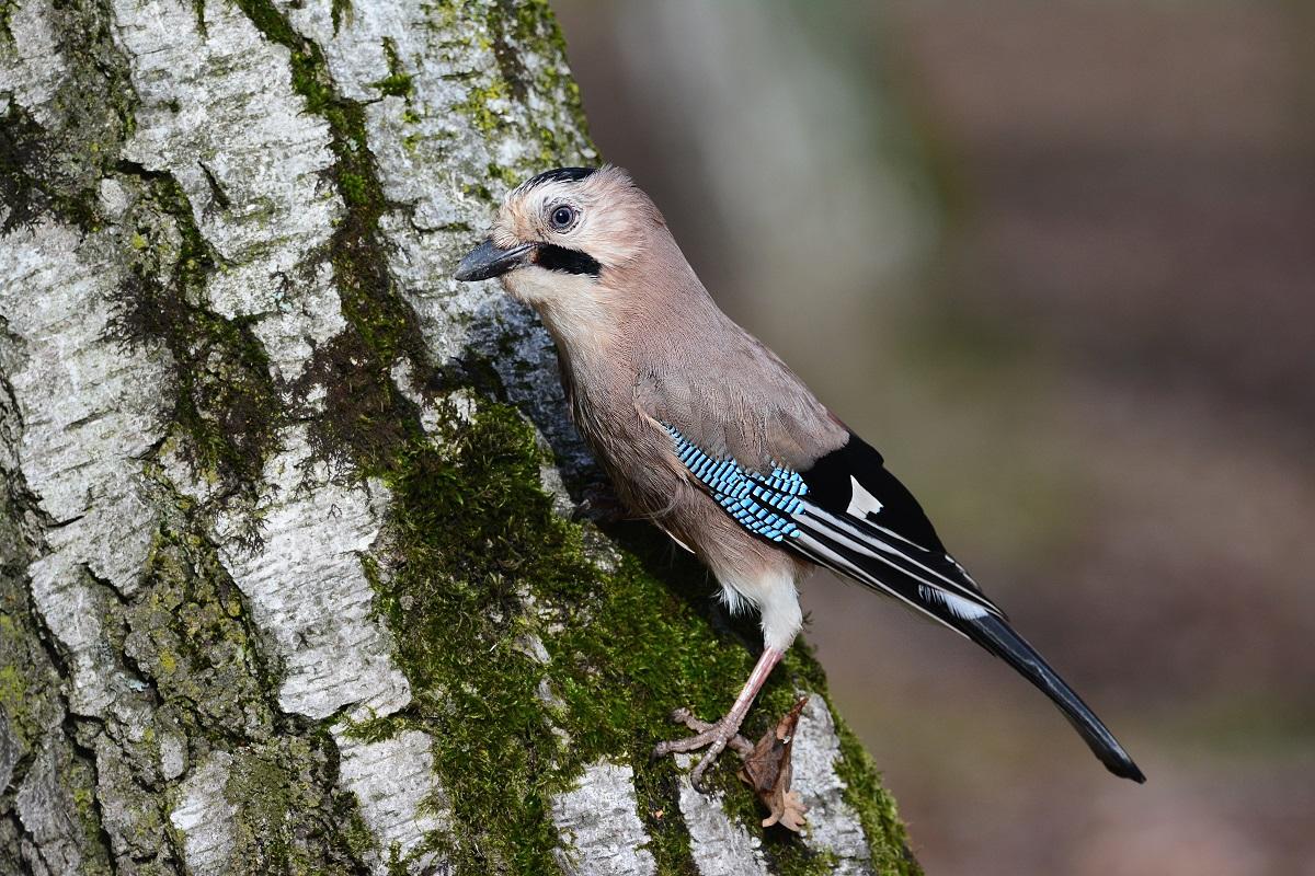 фото птиц в эльблонге засекал через сколько