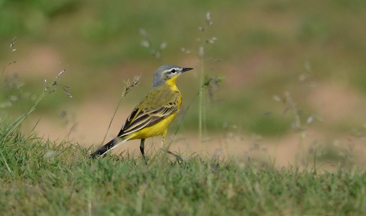 какие редкие птицы ставропольского края круглого оттенка стиле