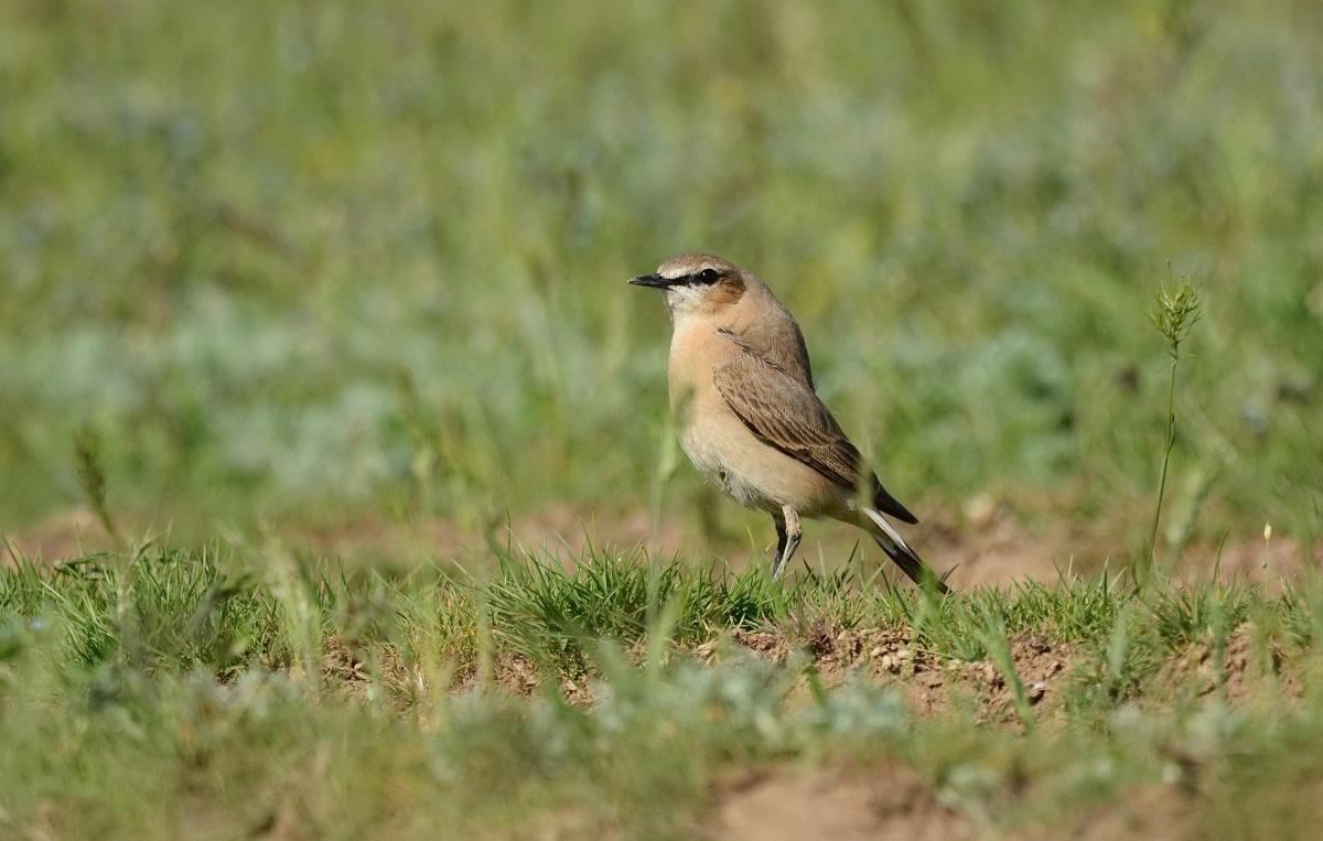 редкие птицы ставропольского края семье