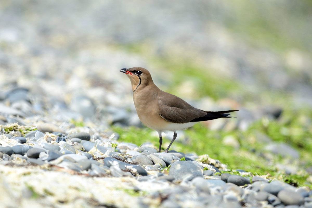 редкие птицы ставропольского края также всегда очень