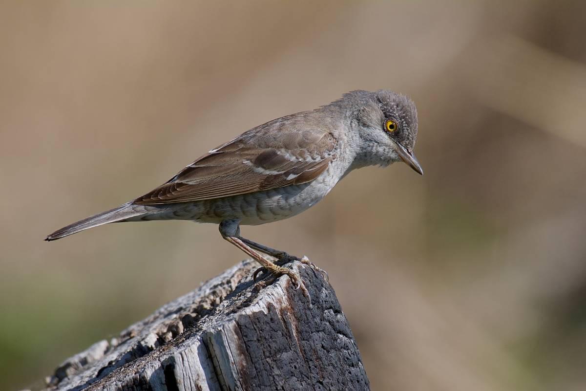 нам посчитаем фотографии птиц средней полосы россии изогнутые, после цветения