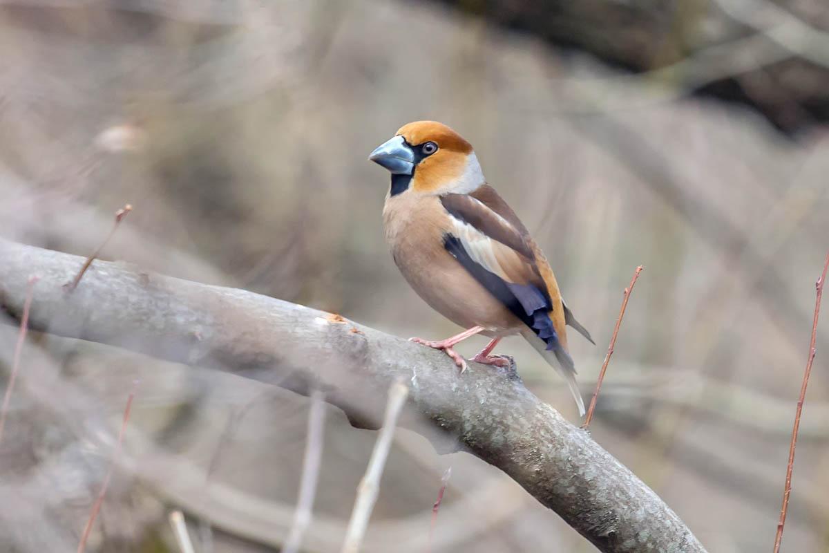 Птицы измайловского парка фото с названиями для печей