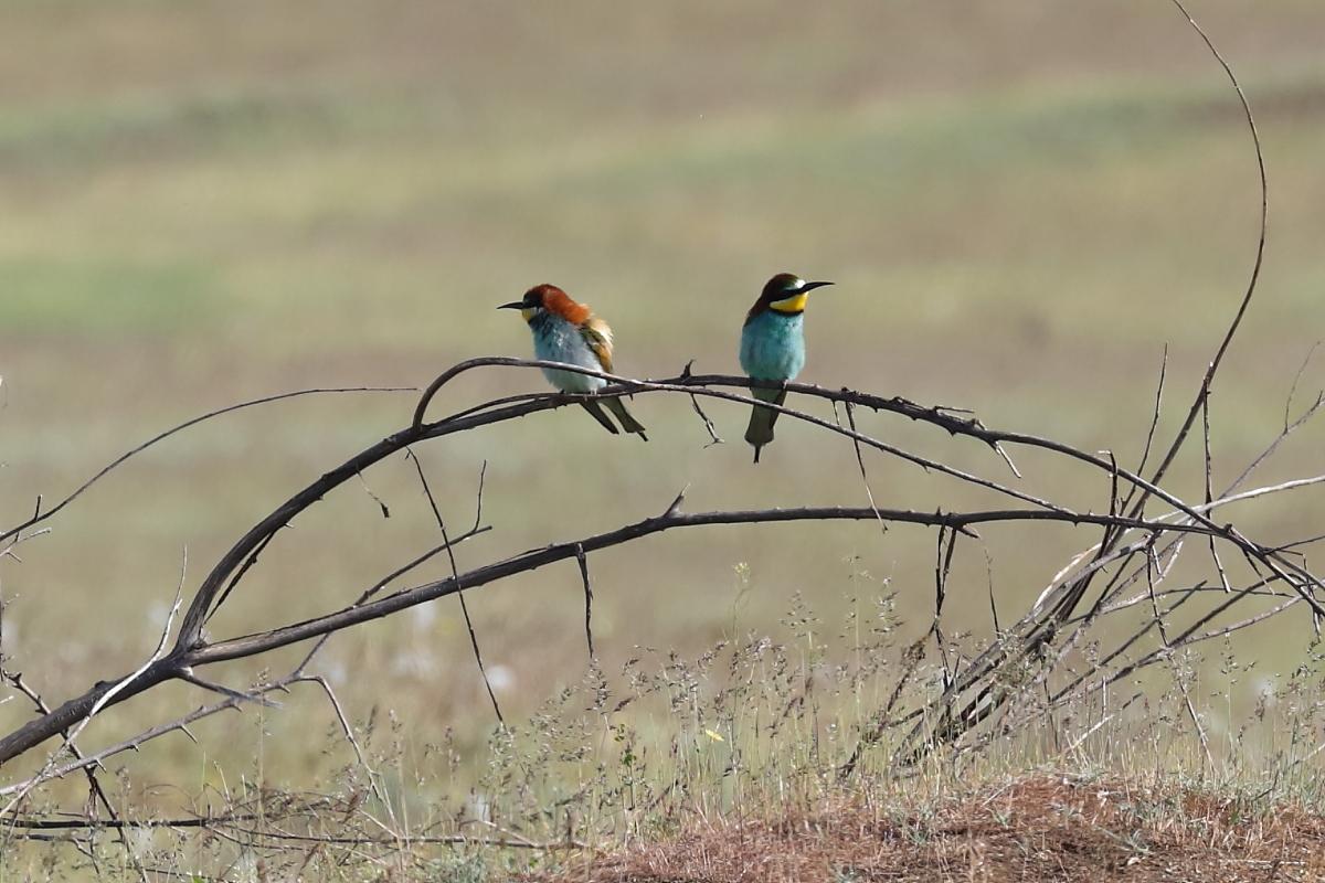 меня, редкие птицы ставропольского края глянуть как там