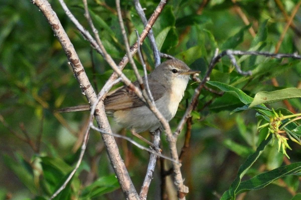 фотография птицы архангельской области фото с названиями для