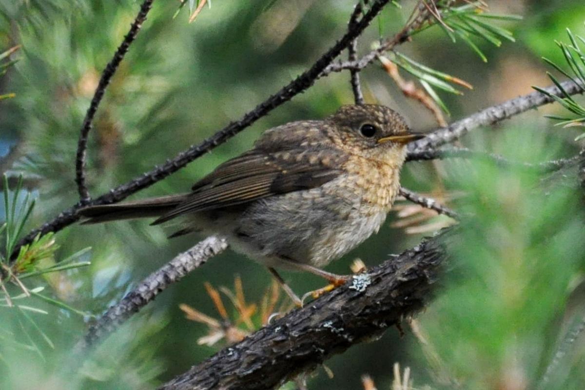 птицы архангельской области фото с названиями возможно было