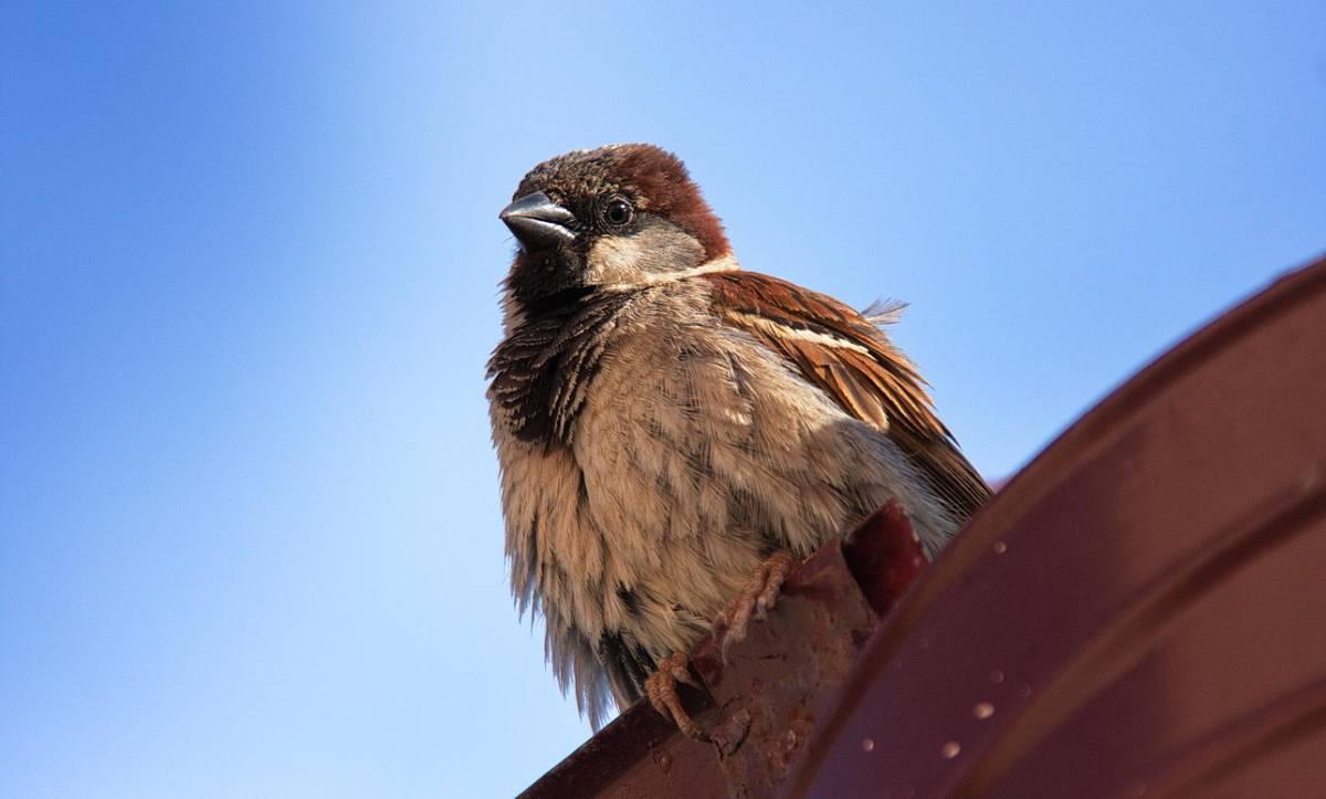 фото птиц воробьев джигиты дубровская одна самых
